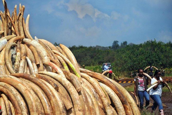 Nairobi Park & Elephant Orphange Tour