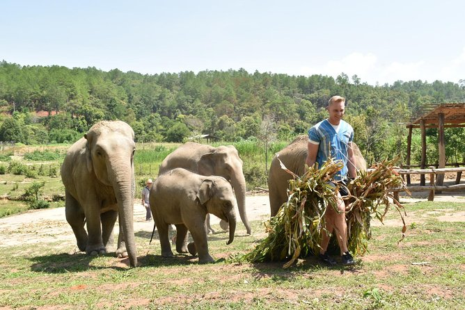 Private Trekking And Elephant Care