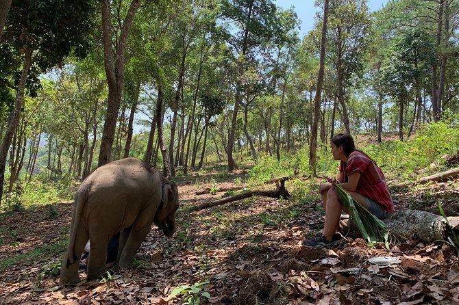 Care Pride Elephants (Dia Inteiro)