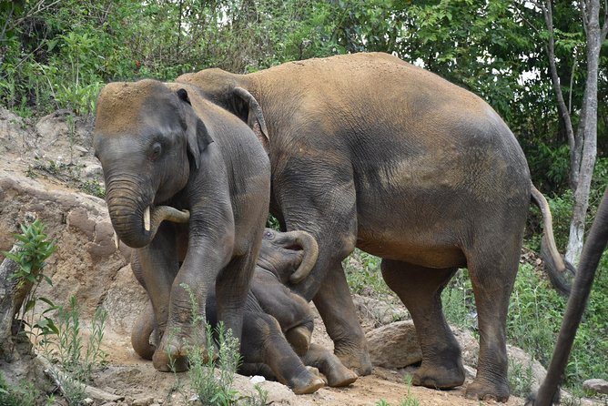 Care Pride Elephants: Full Day Tour