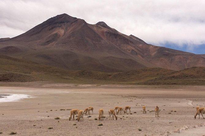 Full Atacama Experience