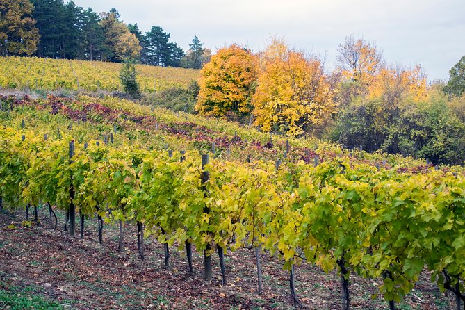 Private Limo Wine Tour of Napa Valley or Sonoma Valley from San Francisco