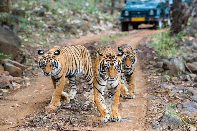 Ranthambore Jungle safari with Golden Triangle tour