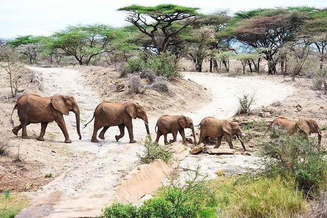 8 Days Joining Safari Tour Tanzania