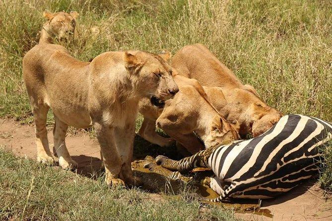 5 Days Luxury Lodge Safari Tour Tanzania