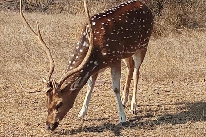 8 Days: Delhi Agra Jaipur Ranthambore tour(Golden Triangle Tour & Ranthambore)