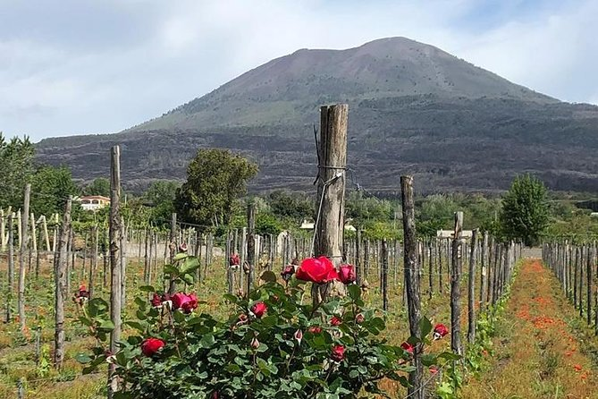 Private day tour on Mount Vesuvius winery and Pompeii ruins - 2 people