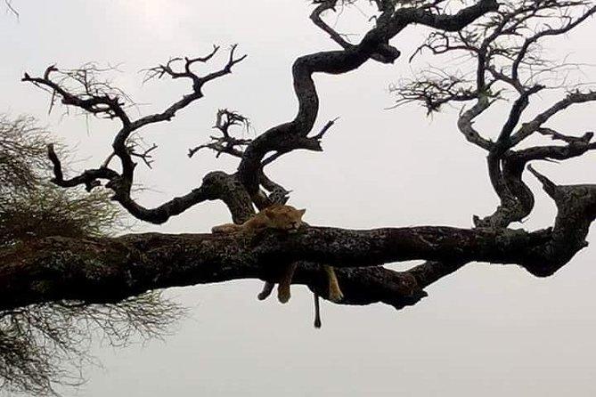 Manyara day trip joining Safari