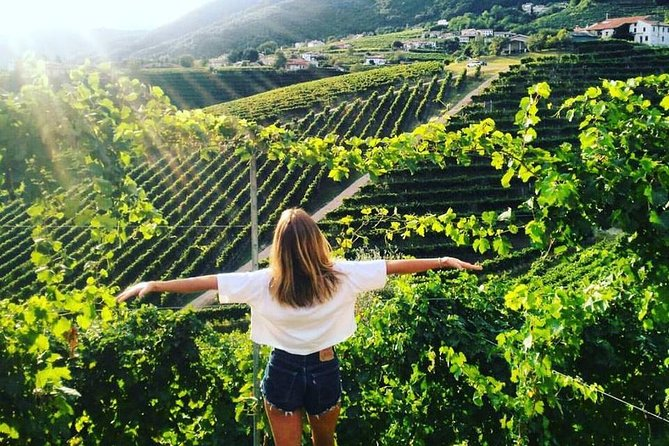 Prosecco hills hiking tour and wine tasting