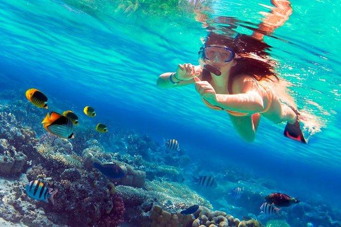 Saona Island VIP - Full Day Excursion!