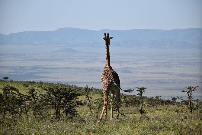 3 Days / 2 Nights Join Group Safari Tanzania