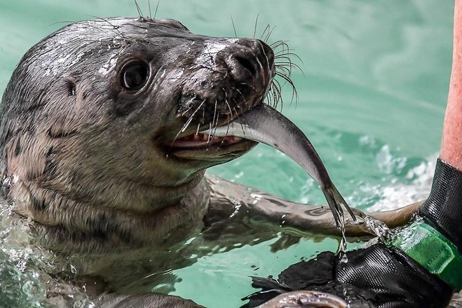 Seal Spotting & Seal Rescue Center Pieterburen 9hrs - Private Group Tour (7p)