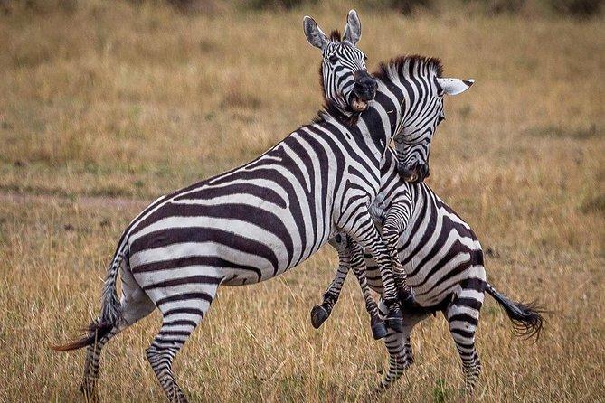 3 Days / 2 Nights join group safari (Serengeti National park)