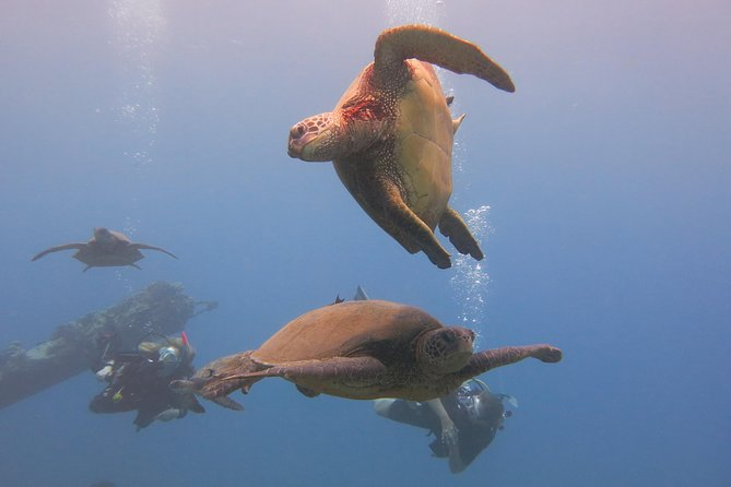 Private Dive for 2 in Lahaina