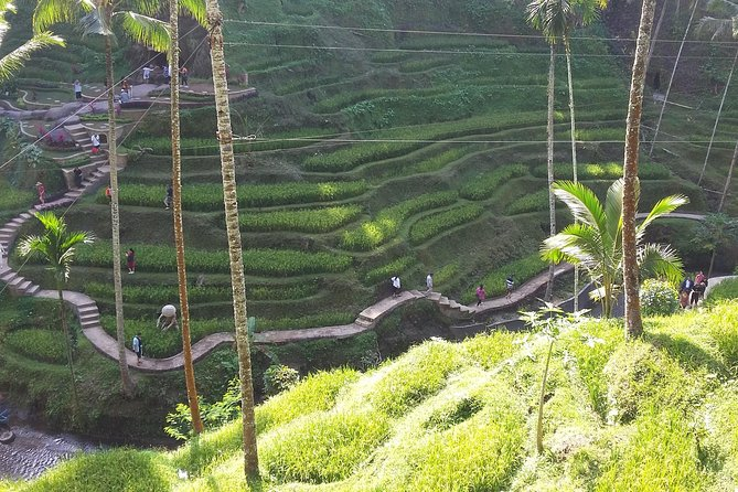 Ubud Culture And Panorama Tour