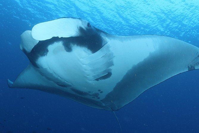 Nusa Penida 1 Day Diving Trip - For Certified Diver