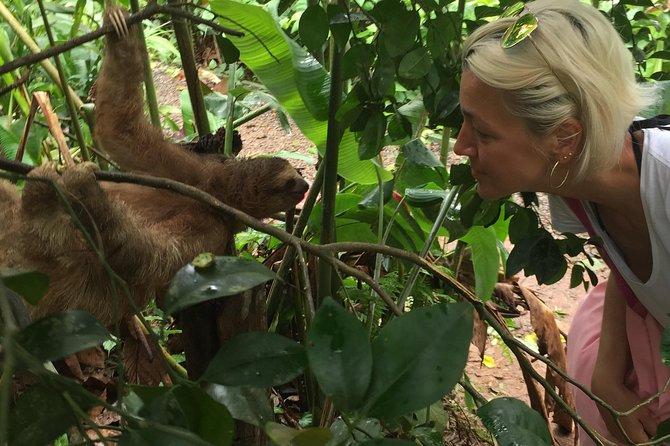 Tenorio Rain Forest Hanging Bridges & Sloth Encounter