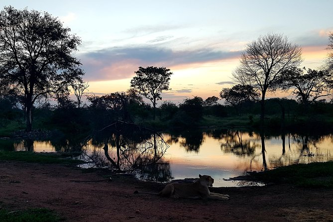Night Game Drive - Big 5 - Balule Nature Reserve Greater Kruger