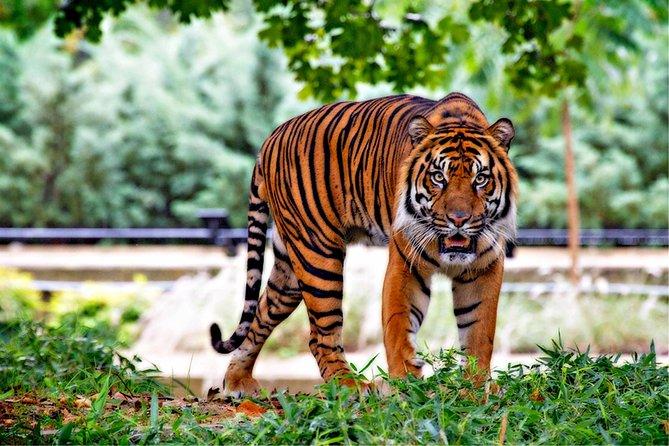 Jim Corbett Jungle Safari