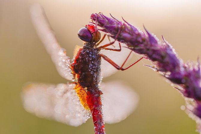 Macro Photography Workshop (insects) in Norberg