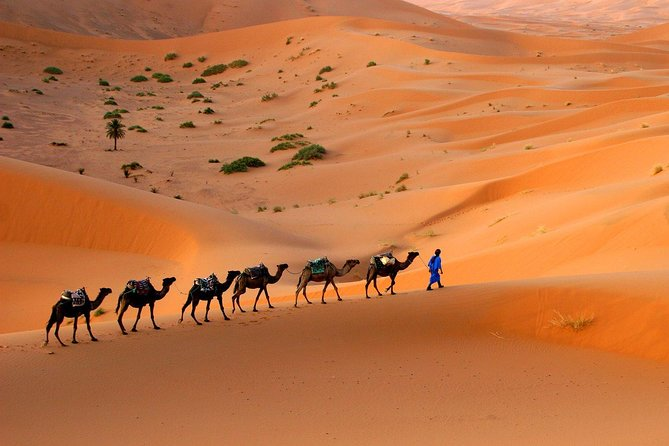 Desert tour from Fes to Marrakech 4 days photo 5