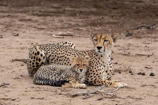 5 Days Tanzania Safari Tour