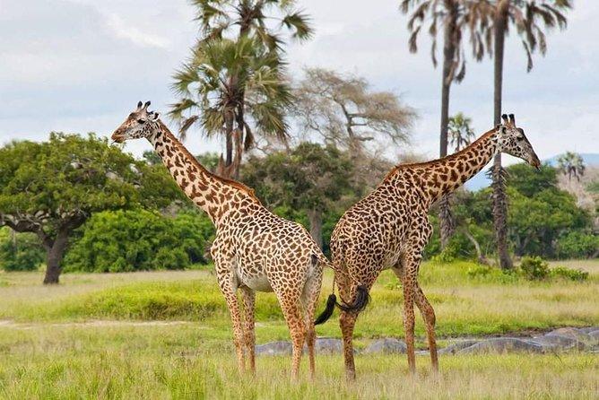 7 Days Join Tanzania Group Safari