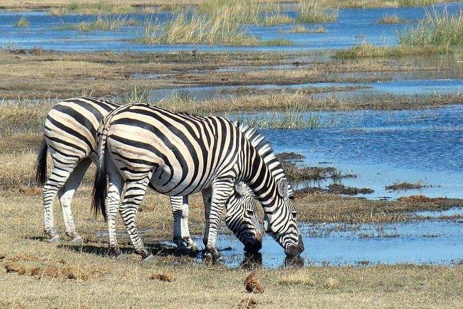 Tanzania Safari Day trip Arusha National Park