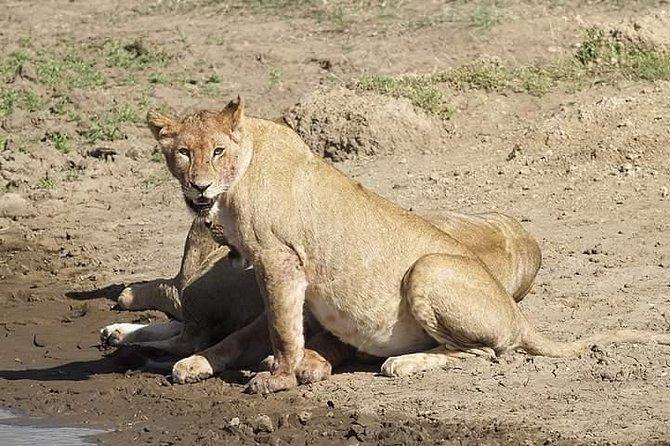 5 Days Lodge Safari Tanzania