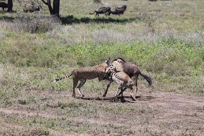 10 pax for 9 Camping & Hotels DAYS in Tanzania safaris