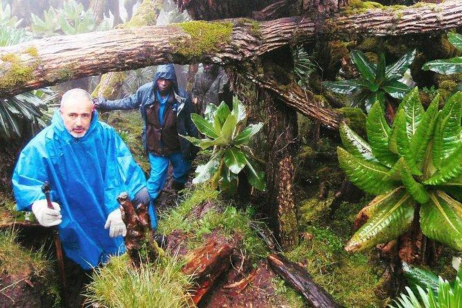 3 Days Rwanda Gorilla Trekking Tour