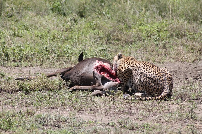 4 pax for 10 DAYS, Safari in the national parks of northern Tanzania photo 11