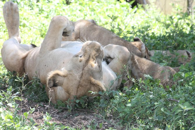4 pax for 10 DAYS, Safari in the national parks of northern Tanzania photo 2