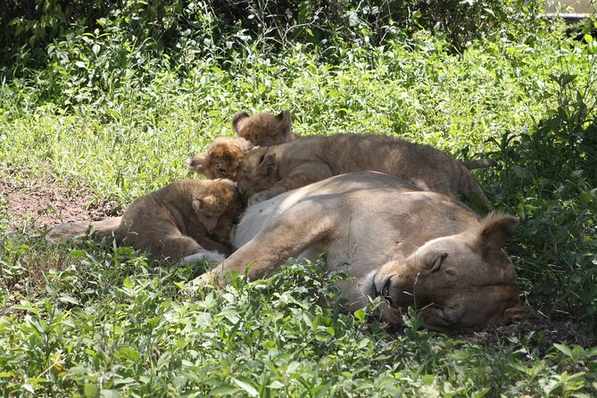 4 pax for 10 DAYS, Safari in the national parks of northern Tanzania photo 4