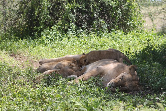 4 pax for 10 DAYS, Safari in the national parks of northern Tanzania photo 9