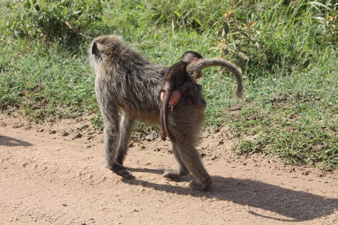 4 pax for 10 DAYS, Safari in the national parks of northern Tanzania photo 6