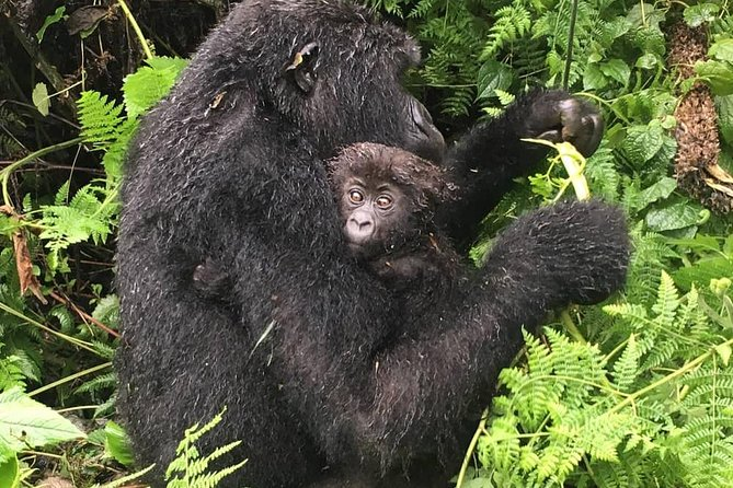 4 Days Mountain gorilla tour photo 9