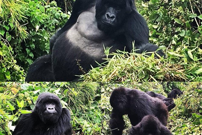 4 Days Mountain gorilla tour photo 12