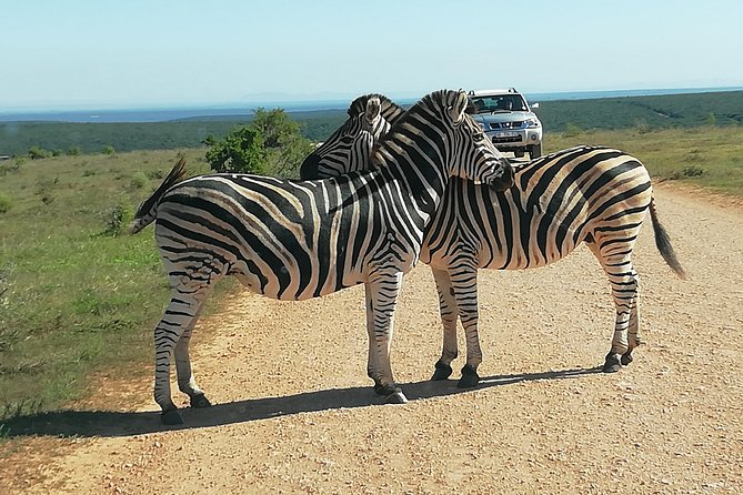 Addo Elephant Park Day Safari from Port Elizabeth