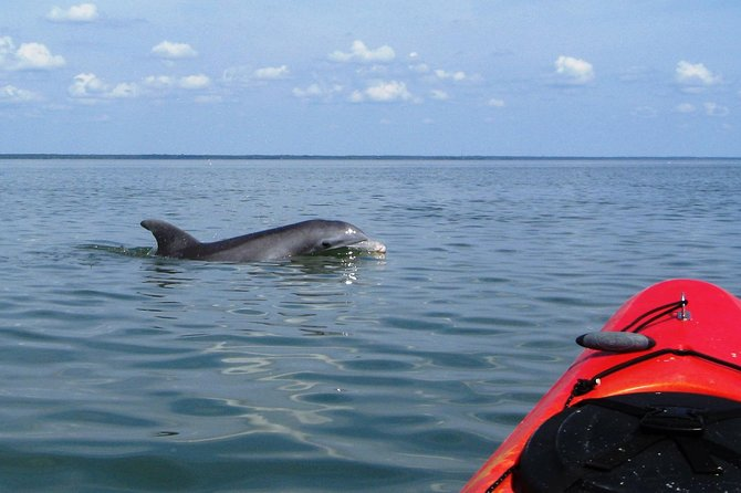 Fully Guided Kayaking Backwater Manatee and Dolphin Tour photo 3