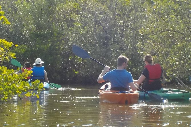 Fully Guided Kayaking Backwater Manatee and Dolphin Tour photo 6