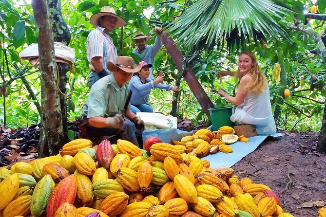 Private Chocolate Full Day Tour Including Lunch