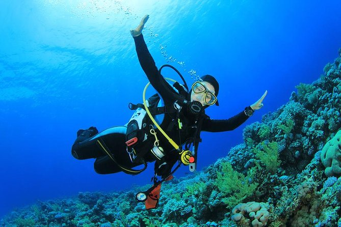 Professional Scuba Diving Full Day Boat Trip – Hurghada