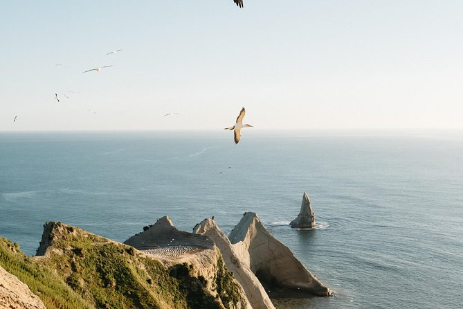 Private tour to Cape Kidnappers Gannet Colony