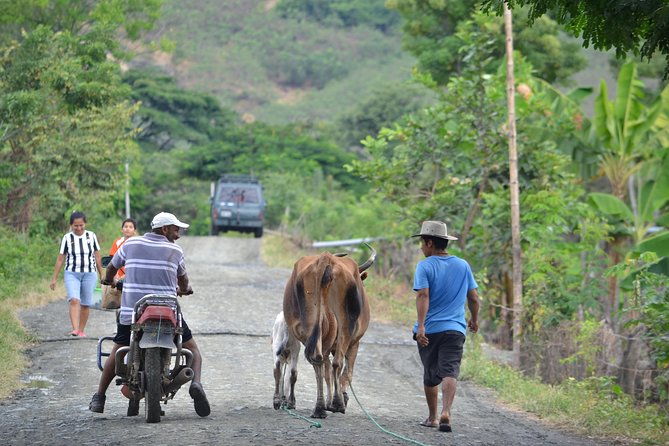 Bicycle tour: Los Lojas - A natural secret. From Guayaquil