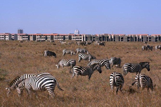 6.a.m to 12 noon TOUR NAIROBI PARK SAFARI/ ELEPHANT ORPHANAGE/GIRAFFE CENTRE