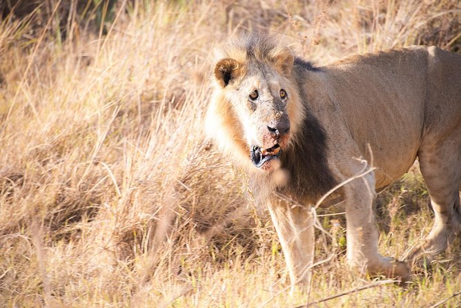 Drive to Nairobi National Park 6.a.m to 11.a.m