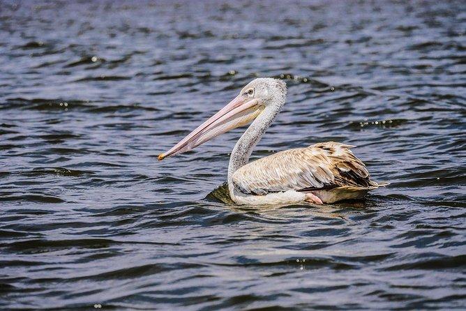 Lake Nakuru Day Tour From Nairobi