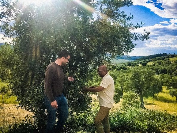 Discovering extra virgin olive oil