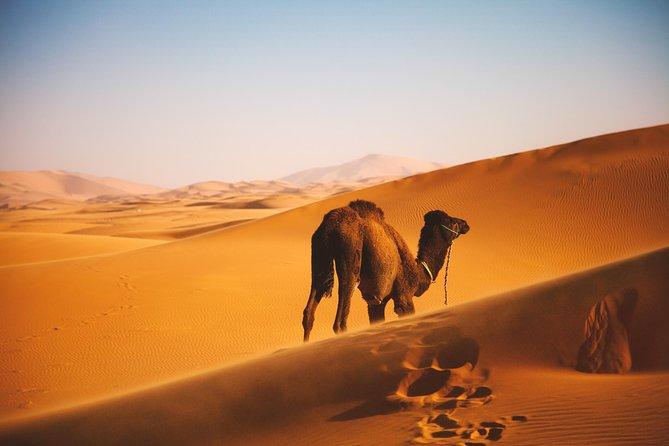 2 Days SAHARA DESERT: Marrakech to Zagora Desert